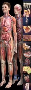 Premier-Zygote-Human-Anatomy