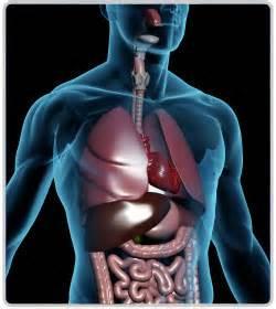 Respiratory System Image 2