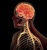 NERVOUS SYSTEM (CNS/ PNS)
